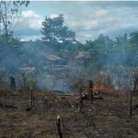 Slash and burn agriculture in Amazonian rainforest