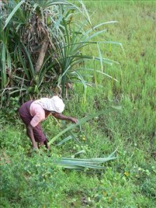 In third world countries most of the farming work is done by women